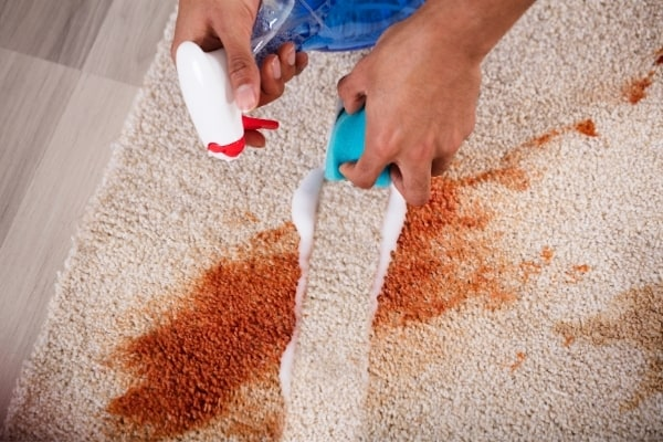 Stain Carpet Cleaning Cambridge Spotless Commercial